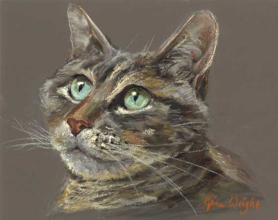 Tabby cat with blue green eyes