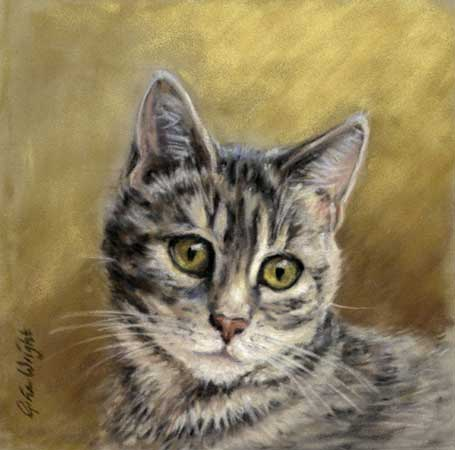 Isla, Tabby Cat