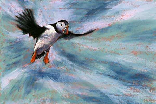 Puffin Landing, Pastel | Gina Wright, Scottish Artist: www.ginawright.co.uk/puffin_landing_pastel.html