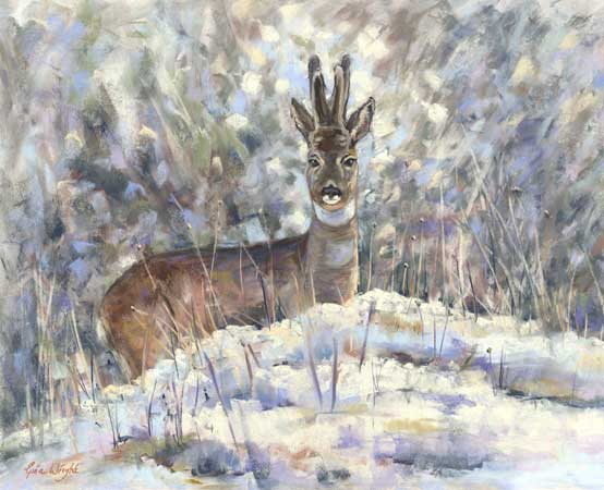 Roe stag in snowy landscape