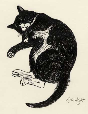 Sleeping Cat Three, Ink Sketch